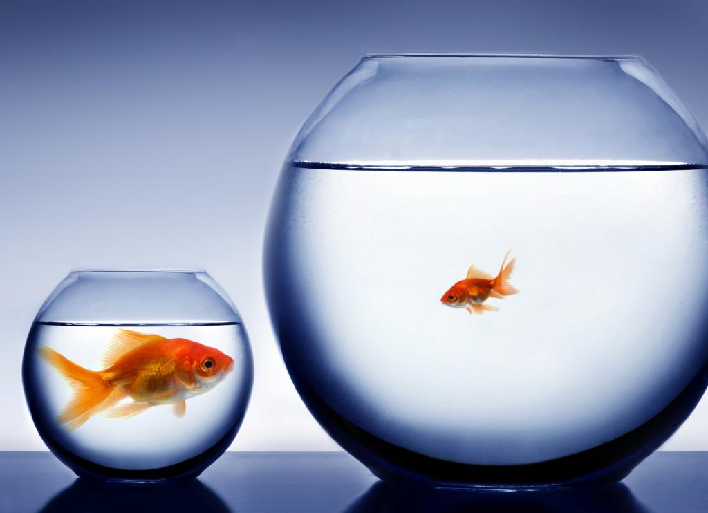 Nominasjonskomitéen til idrettsgallaen synes tydeligvis en stor fisk i en liten bolle (norske langrennsutøvere) er større enn en liten disk i en stor bolle (norsk syklist).